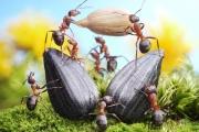 Биологи нашли муравьев-фермеров
