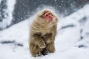 8 животных, которые нашли необычное применение снегу