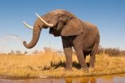 Численность слонов в заповеднике Африки упала на 80 %