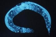 Живой микромир — впервые в 3D