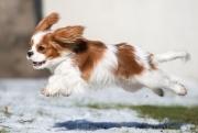 Снежные заряды, шквалистый ветер и... грозы! — начало недели в Черноземье