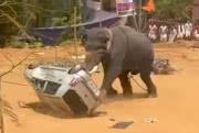 Слон буянит на фестивале в Индии: видео