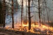 В Забайкалье объявили режим ЧС из-за огромного числа природных пожаров