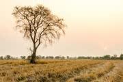 НАСА: реабилитация  от засух будет занимать больше времени