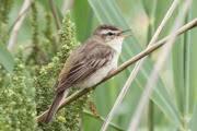 Ученые рассказали, как работает «компас» птиц
