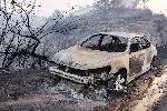 Число погибших из-за лесного пожара в Калифорнии достигло 31 человека