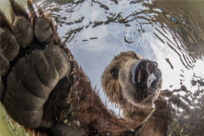 Природа глазами лучших фотографов: конкурсные фото